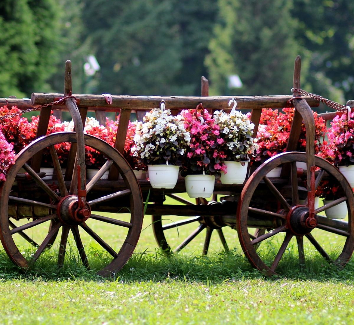 nice flowers healthy dp